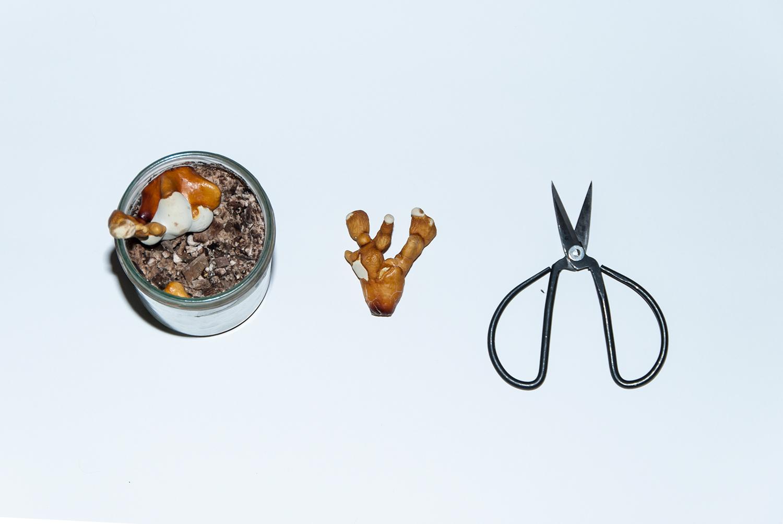 Pilz und Schere